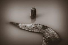 Árvore seca de flutuação Fotos de Stock Royalty Free