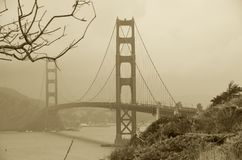 Árvore seca e golden gate bridge, San Francisco, Califórnia, EUA Fotografia de Stock Royalty Free