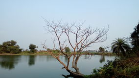 A árvore seca em águas azuis imagens de stock