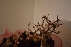 Árvore seca inoperante dos bonsais com flores secas imagens de stock royalty free