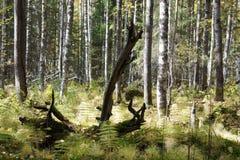 Árvore seca na floresta Foto de Stock