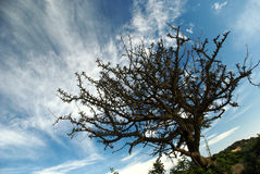 Árvore seca na praia de Chia imagem de stock
