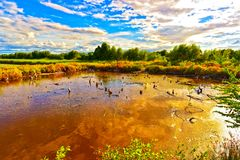 A árvore seca reflete a água no pântano sob o céu azul imagem de stock