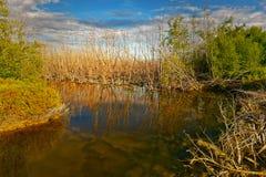 A árvore seca reflete a água no pântano sob o céu azul fotos de stock royalty free