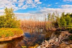 A árvore seca reflete a água no pântano sob o céu azul foto de stock royalty free