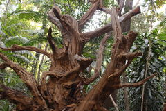 Árvore seca sinistra Imagens de Stock Royalty Free