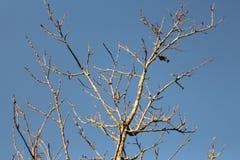 Árvore seca sob o céu Fotografia de Stock
