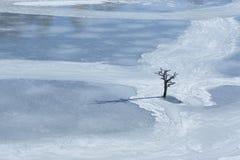 A árvore seca velha afrozen dentro o mundo foto de stock