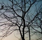 Árvore secada Foto de Stock