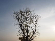 Árvore secada Fotografia de Stock
