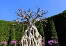 Árvore sem as folhas foto de stock