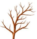 Árvore sem folhas. Imagem de Stock Royalty Free