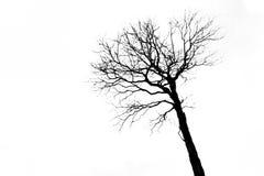 Árvore sem folhas Foto de Stock