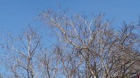 Árvore sem folhas fotografia de stock
