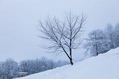 Árvore sem folhas Fotografia de Stock Royalty Free