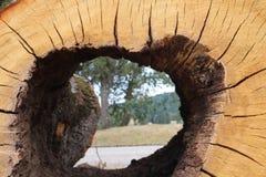 Árvore sem núcleo no parque fotografia de stock royalty free