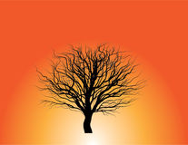 Árvore sem silhueta das folhas Foto de Stock