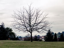 Árvore sem silhueta das folhas Fotografia de Stock Royalty Free