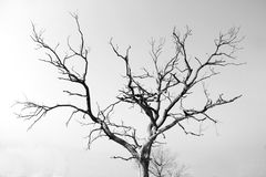 Árvore sem-vida seca Fotos de Stock Royalty Free