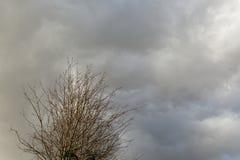 A árvore senta-se sob um céu nebuloso fotos de stock royalty free