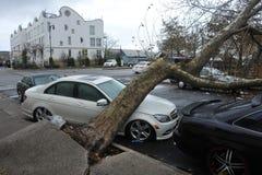Árvore sentida para baixo ao carro Fotografia de Stock Royalty Free