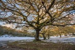 Árvore simétrica Imagens de Stock