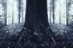 Árvore simétrica na floresta misteriosa escura surreal Fotografia de Stock