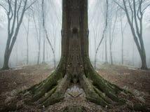 Árvore simétrica surreal em uma floresta com névoa e geada fotos de stock royalty free
