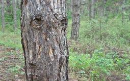 Árvore similar ao ser humano Foto de Stock