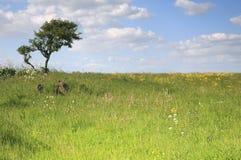 Árvore singular Fotografia de Stock