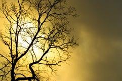 Árvore sinistra Fotos de Stock