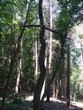 Árvore sinusoidaa Imagem de Stock
