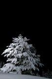Árvore Snow-covered fotos de stock