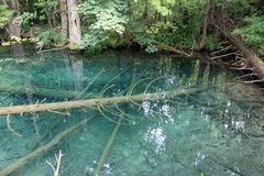 Árvore sob a água fotos de stock