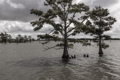 Árvore sob a água Imagem de Stock Royalty Free
