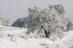 Árvore sob a neve Foto de Stock Royalty Free