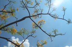 Árvore sob o céu azul imagens de stock royalty free