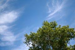 Árvore sob o céu azul Fotografia de Stock