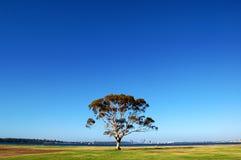 Árvore sob o céu azul Foto de Stock Royalty Free