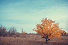 Árvore sob o céu azul com nuvens Fotografia de Stock Royalty Free