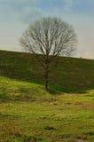 Árvore sob o cume Fotografia de Stock Royalty Free