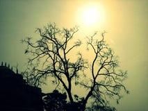 Árvore sob o sol Foto de Stock Royalty Free