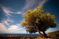 Árvore sob um céu da Lua cheia com nuvens Fotos de Stock