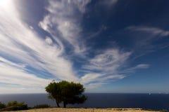 Árvore sob um céu da Lua cheia com nuvens Imagem de Stock