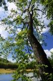 Árvore sobre a água Fotografia de Stock