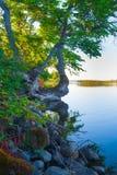 Árvore sobre a água imagens de stock