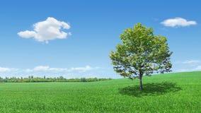 Árvore sobre ao prado Foto de Stock