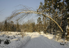Árvore sobre a estrada do inverno Foto de Stock Royalty Free