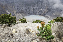 Árvore sobre a montanha do vulcão Foto de Stock Royalty Free