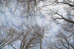 Árvore sobre o céu Imagens de Stock Royalty Free